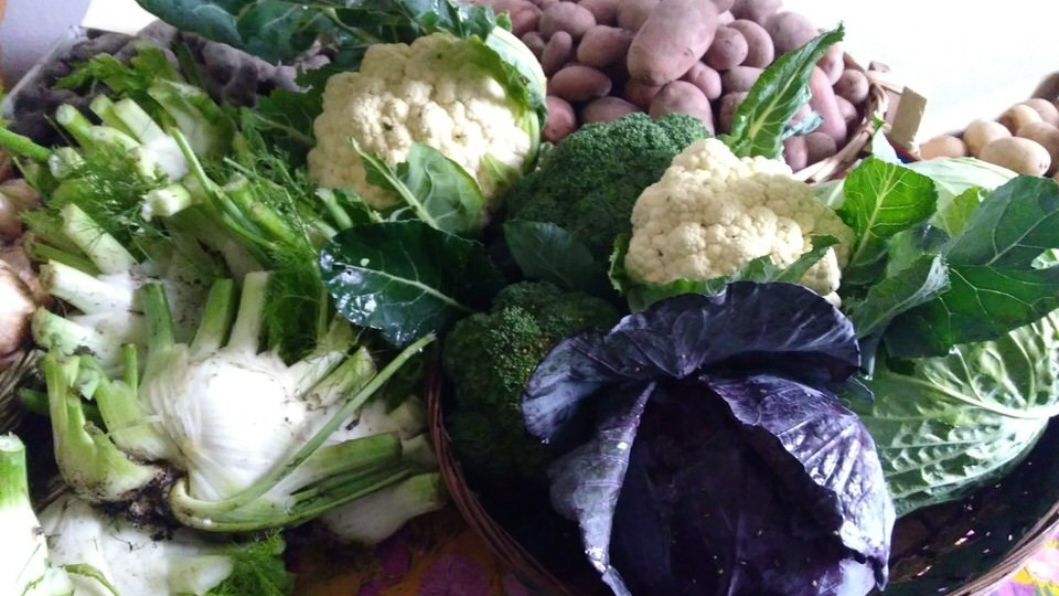 cassetta piccola verdura